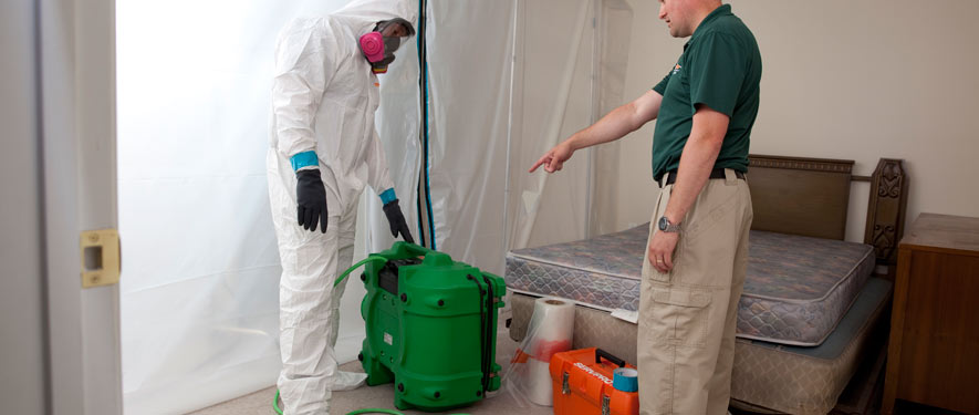 Redmond, WA mold removal process